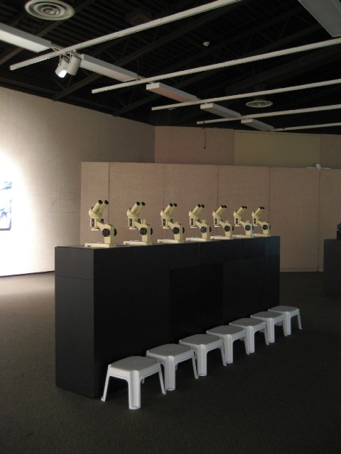 Nature of Uncertainty (detail), 2007: installation at Art Gallery of Algoma featuring stereoscopic microscopes with hand-painted microscopy slides.