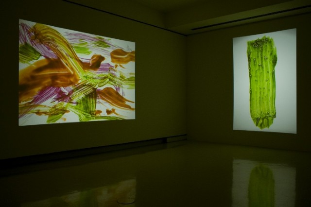 The Physical Nature of Immateriality, 2005- 2008: installation view of projections of hand painted glass slide mounts at UB Anderson Gallery, 2007. Variable dimensions.