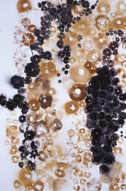 "Improvisation XXII, 1999: mushroom spores on primed wood panel with MSA UV inhibiting acrylic varnish, 36""(h) x 24""(w)"